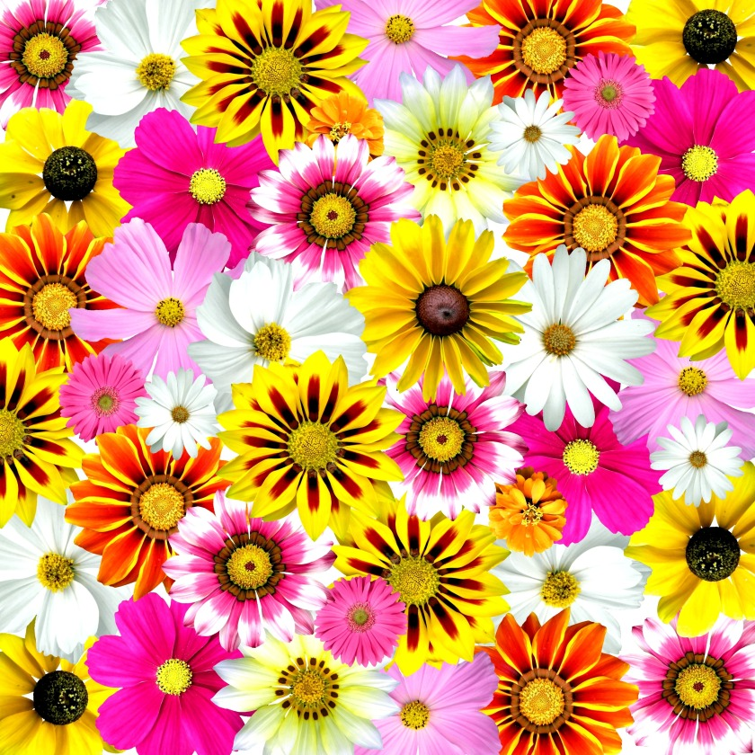 flowers_colorful_summer